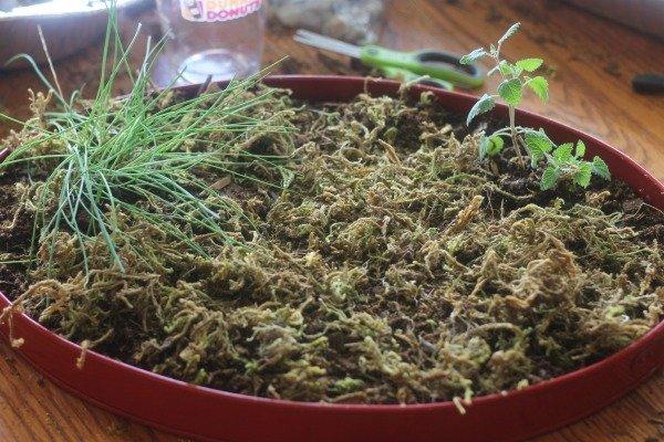 herb gnome garden 2